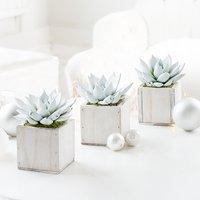 Mini Succulent Trio