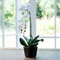 Artificial White Phalaenopsis