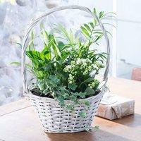 Classic Seasonal Flowering Basket