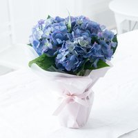 Gift Wrapped Blue Hydrangea