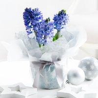Gift Wrapped Christmas Hyacinth