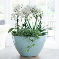 Luxury Orchid Bowl