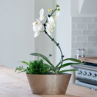 Spiral Orchid Planter
