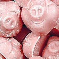Porky Pigs