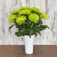 Blumenstrauß Chrysanthemen