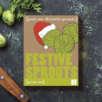 Grow Your Own Festive Sprouts - Grow Your Own Gifts