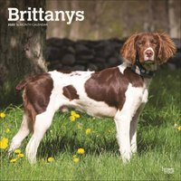 Brittanys Calendar 2020 - Dogs Gifts