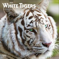 White Tigers Calendar 2020 - Tigers Gifts