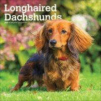 Longhaired Dachshunds Calendar 2020 - Dogs Gifts
