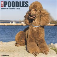 Just Poodles Calendar 2020 - Dogs Gifts