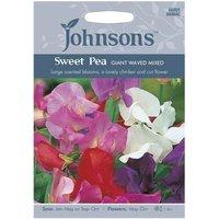 Johnsons Sweet Pea Giant Waved Mi Seeds