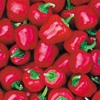 Miniature Bell Red Chili Samen