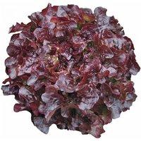 Salat Oakleaf Navarra Samen