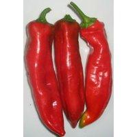 Nocera Rosso Chili Samen