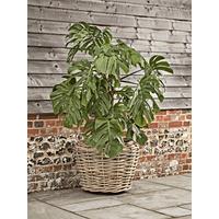 Chunky Rattan Planter