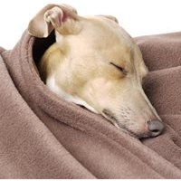 Double Fleece Dog Blanket in Mocha - Large