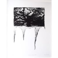 Framed Limited Edition Etching - Disseminating Oak