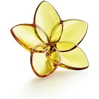 Baccarat The Bloom Collection Amber Bloom | 2813014 - Decorations Gifts