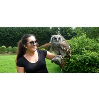 Click to view details and reviews for Birds Of Prey Owl Experience.