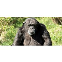 Adult Entry to ZSL London Zoo - Adult Gifts
