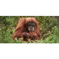 Wildlife Photography Experience in Chester Zoo - Photography Gifts