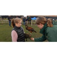 British Birds of Prey Experience in Bedfordshire - Experiences Gifts