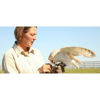 Falconry Experience Warwickshire - Half Day - Falconry Gifts