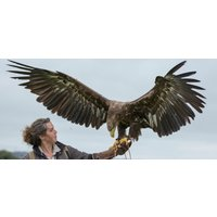 Full Day Falconry Experience - Fife - Falconry Gifts