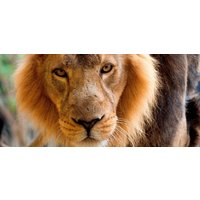 ZSL London Zoo and Lunch For Two - Food Gifts