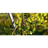 Luxury East Sussex Vineyard Tour For 2 - Luxury Gifts