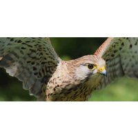 Click to view details and reviews for Junior Birds Of Prey Experience.