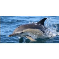 Dolphin and Seal Spotting Experience in Penzance - Experiences Gifts