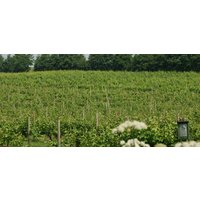Vineyard Tour, Wine Tasting & Lunch - Cambridgeshire - Alcohol Gifts