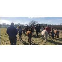 Alpaca Experience for 2 in Warwickshire - Days Out Gifts