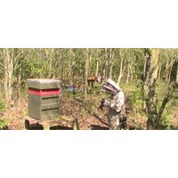 Beekeeping Experience Day Bedford - Experiences Gifts