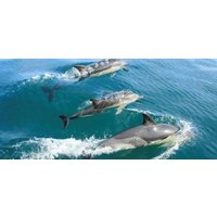 Pembrokeshire Whale and Dolphin Watching Experience - Experiences Gifts