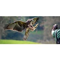 Half Day Falconry And Owl Experience - Northampton - Falconry Gifts