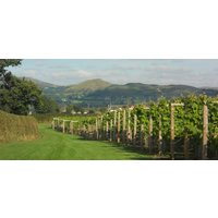 Shropshire Vineyard Tour And Wine Tasting For Two - Alcohol Gifts