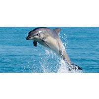 New Quay Dolphin Spotting Family Experience - Experiences Gifts