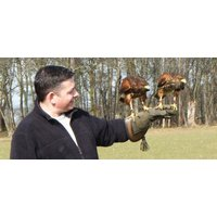 Falconry For Two In Wales - Falconry Gifts