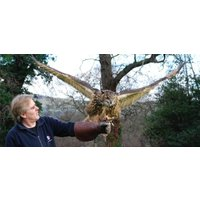 Private Falconry Experience North Wales - Falconry Gifts