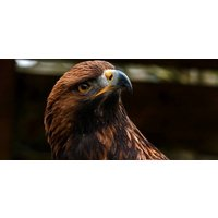 Click to view details and reviews for Eagle Encounter For Two Cheshire.