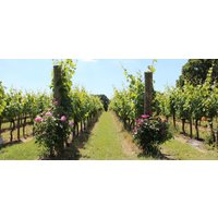 Sussex Wine Tasting and Vineyard Tour - Alcohol Gifts