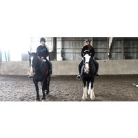 Horse Riding in Hampshire - Beginner Lesson - Riding Gifts