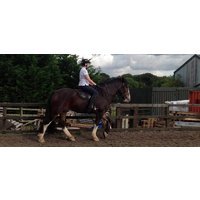 Horse Riding in Hampshire - Advanced Lesson - Riding Gifts