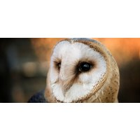 Click to view details and reviews for Owl Experience In Kent.