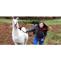 Llama Trekking Experience for Two in Devon - Experiences Gifts