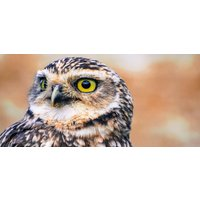 Full Day Falconry Experience - Northampton - Falconry Gifts
