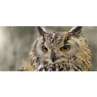 Half Day Falconry Experience - Fife - Falconry Gifts