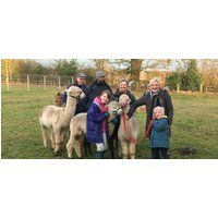 Parent and Child Alpaca Experience for 2 in Warwickshire - Days Out Gifts